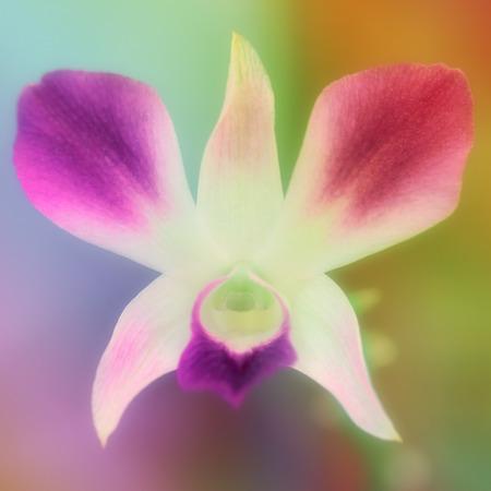 Pink flowers in softfocus