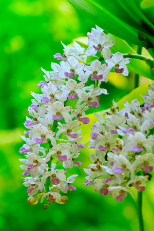 beautiful orchid flowers Stock Photo
