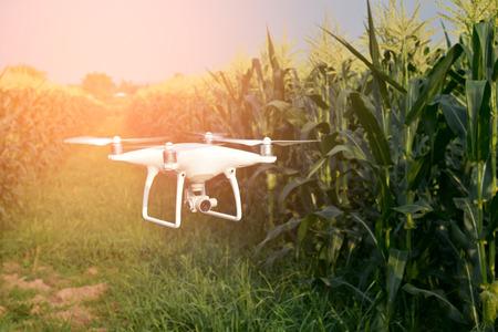 Drone of corn field