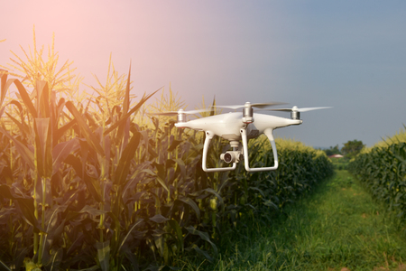 Drone corn field Stockfoto - 77149942