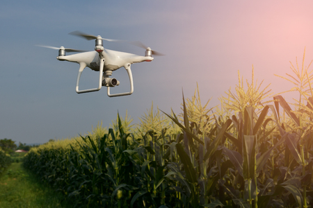 Drone z pola kukurydzy