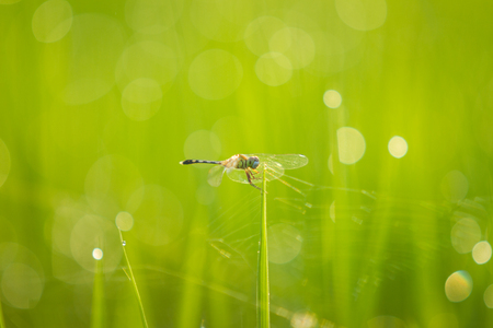 Dragonfly on a bright green background