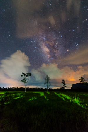 The Milky Way and  trees in Thailand