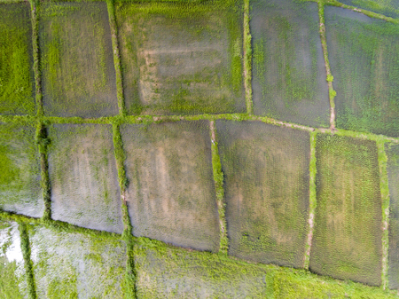 Rice-field high angle view form Drone Stockfoto