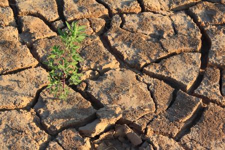 Dryness Stock Photo