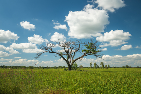 Tree on the rice field and blue sky. Stock fotó