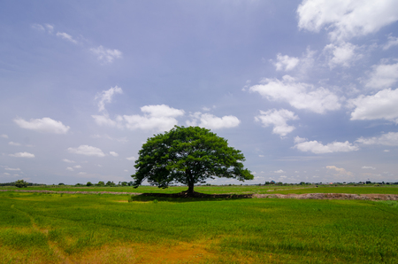 beautiful landscape  Lonely tree in  the meadow.