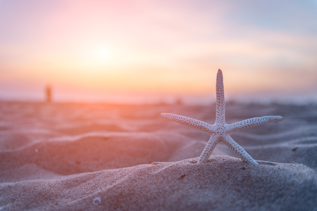 Starfish on the beach at sunset in Thailand
