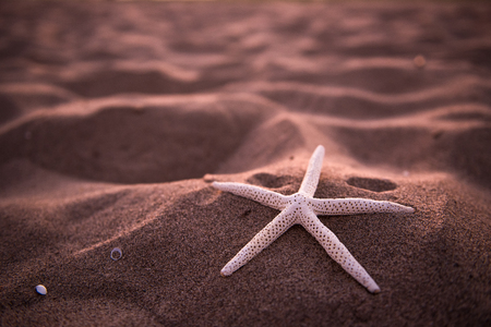 Starfish on the Beach.  Sunset 스톡 콘텐츠
