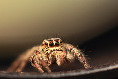 Jumping spiders Standard-Bild