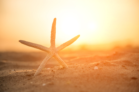 Close-up Starfish On Sand 스톡 콘텐츠