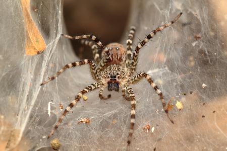 Spider dew.