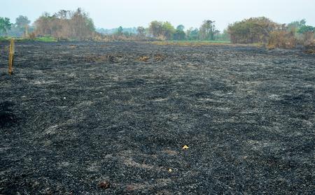 burn: Burn forest ground Stock Photo