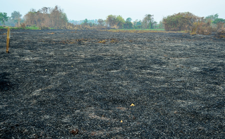 quemadura: Burn suelo del bosque
