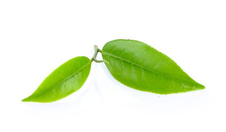 leafs: tea leafs Stock Photo