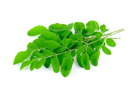 Moringa leafs Stock Photo