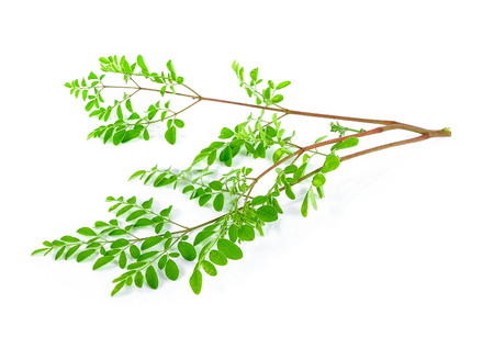 marango: Moringa leafs Stock Photo