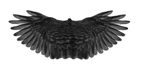 black wing of bird on white background