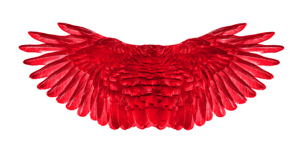 red wing of bird on white background