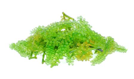 Sea grapes ( green caviar ) seaweed, Healthy food on white background Archivio Fotografico