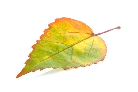 Tropical leaf on white background Archivio Fotografico