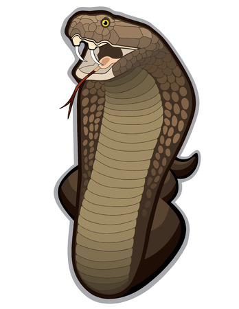 hissing: Cobra snake defending his territory. This Cobra is on alert and ready to strike at any moment. Illustration
