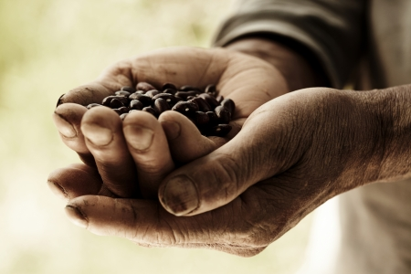 A farmers hands holding out beans