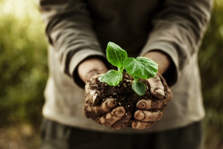 plante: Concept de la santé des légumes biologiques