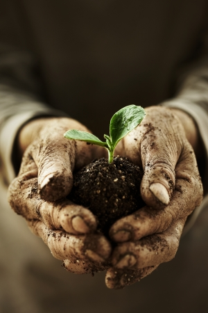 old farmer: health concept organic vegetables  Stock Photo