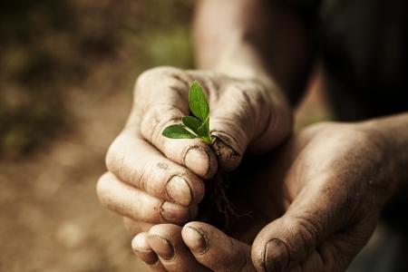health concept organic vegetables  Banco de Imagens