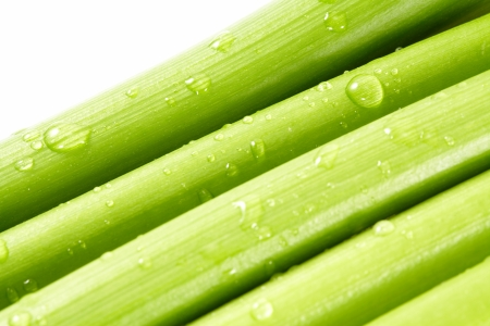 fresh celery with water drops on a white background  Banco de Imagens