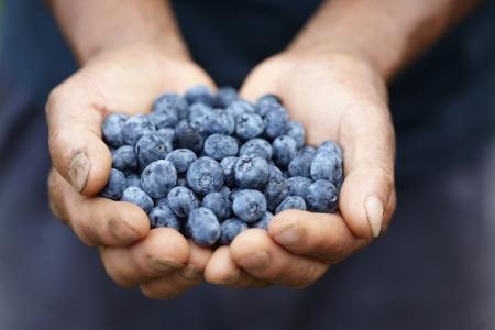 punhado: Handful of blueberries Banco de Imagens