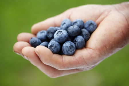 handful: Handful of blueberries Stock Photo