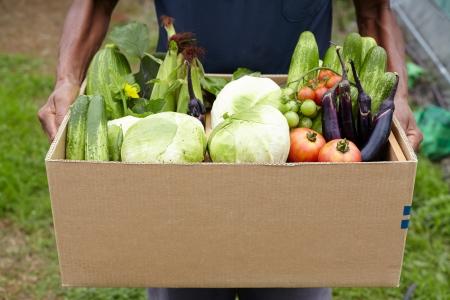 box filled fresh vegetables