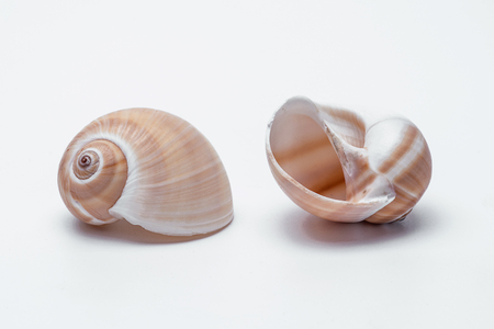 snail shells isolated on white background Stock Photo