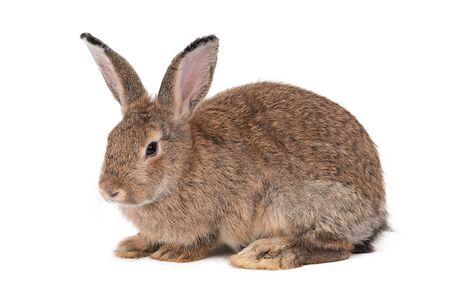 Rabbit on a white background,