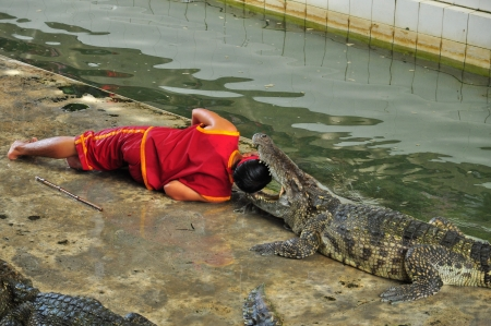 Crocodile show at Bangkok,Thailand