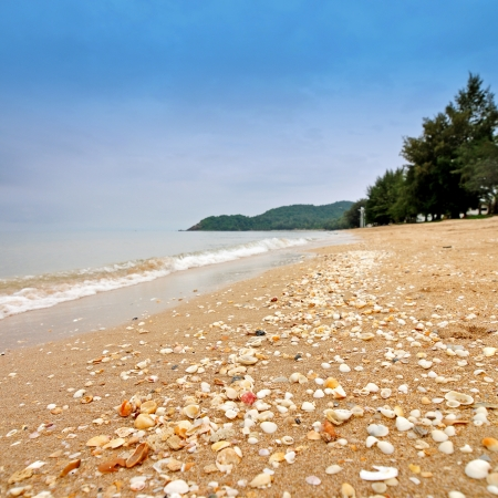Sea shells on sand at the beach Stock Photo - 17065243