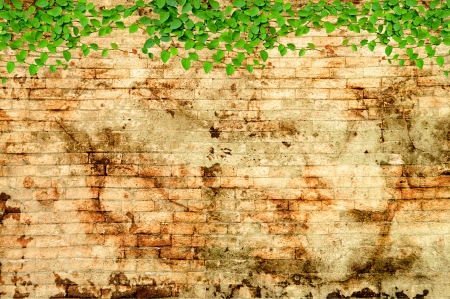 Green Creeper Plant growing on grunge wall photo