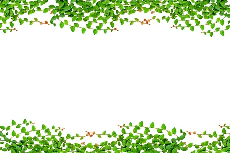greenness: leaves frame isolated on white background
