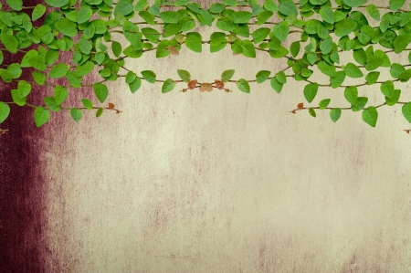 Green Creeper Plant growing on grunge wall Stock Photo - 17067223