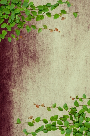 Green Creeper Plant growing on grunge wall Stock Photo