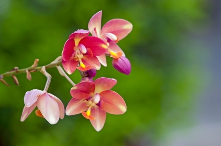 Pink mini orchids flowers Stock Photo - 17066380
