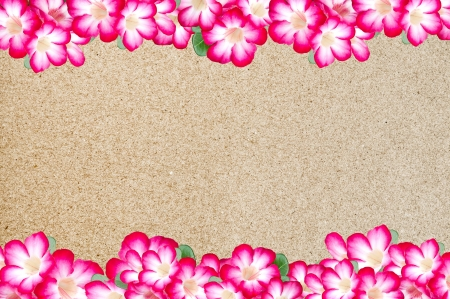flowers frame border Stock Photo - 17067114