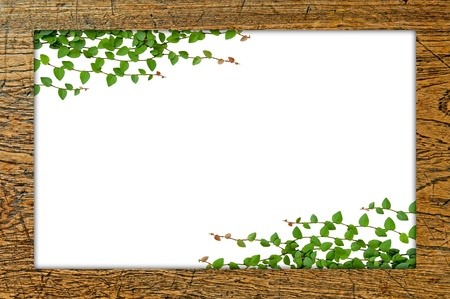 Wooden frame with green leaved Stock Photo - 17066673