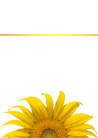 beautiful sunflower Stock Photo - 17066146