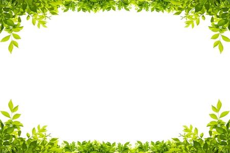 borde de flores: marco de hojas aisladas sobre fondo blanco Foto de archivo