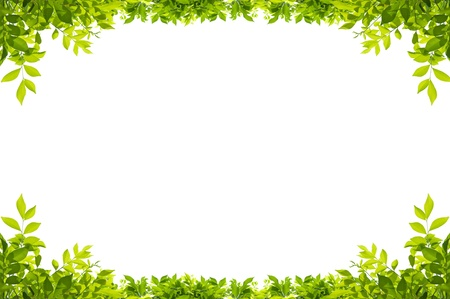folhagem: quadro de folhas isolado no fundo branco