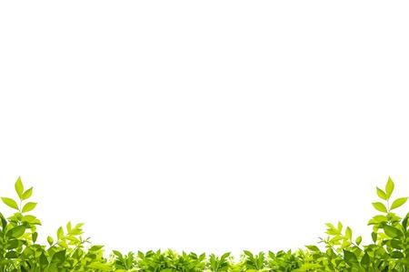 白い背景で隔離の葉フレーム