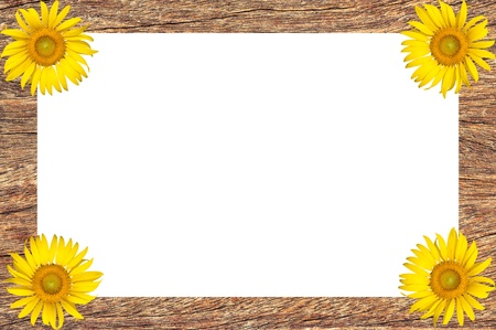 Wooden frame with sunflower blooming photo